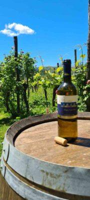 Doživetja v Istri - Istrske hiše Padna